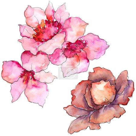 Photo pour Garderie rose et violette. Fleur botanique florale. Élément d'illustration isolé. Aquarelle fleur sauvage pour fond, texture, motif d'emballage, cadre ou bordure . - image libre de droit