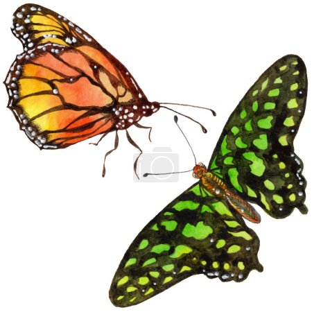 Exotic butterflies wild insect in a watercolor style isolated. Full name of the insect: butterflies. Aquarelle wild insect for background, texture, wrapper pattern or tattoo.