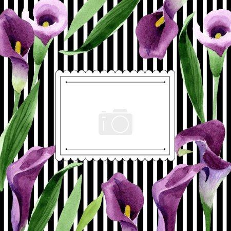 Watercolor purple callas flower. Floral botanical flower. Frame border ornament square.