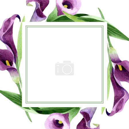 Photo for Watercolor purple callas flower. Floral botanical flower. Frame border ornament square. Aquarelle wildflower for background, texture, wrapper pattern, frame or border. - Royalty Free Image