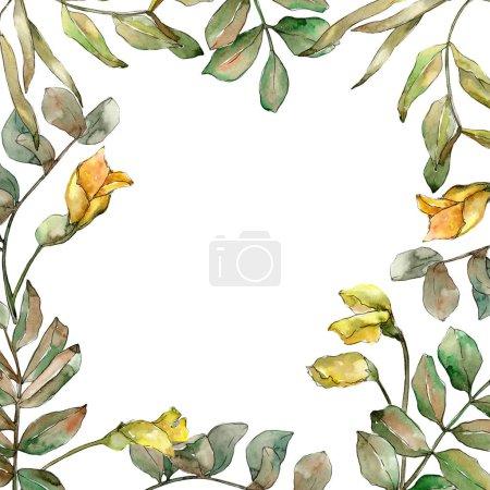 Photo pour Feuilles d'acacia vert automne. Feuillage floral de jardin botanique de plante de feuille. Cadre bordure ornement carré. Feuille Aquarelle pour fond, texture, motif d'emballage, cadre ou bordure . - image libre de droit