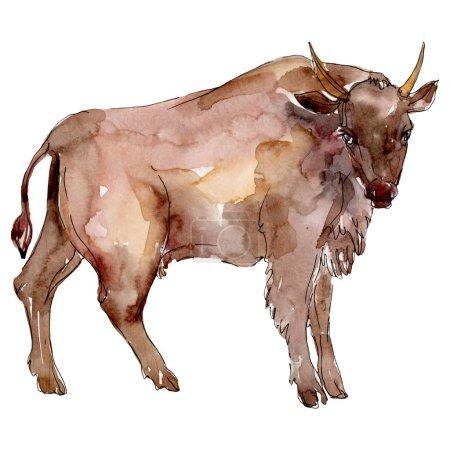 Bull farm animal isolated. Watercolor background illustration set. Isolated bull illustration element.
