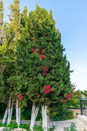 Photo pour Fleurs sur l'arbre vert - image libre de droit