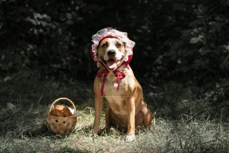 Dog in halloween fairy-tale costume of little red cap. Cute puppy poses in red riding hoold cap and basket with pastry in green forest background