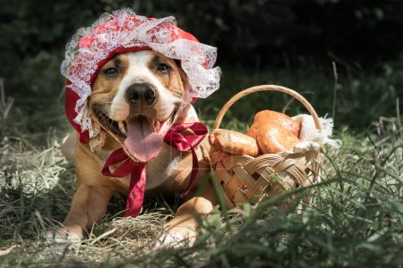 Cute dog in halloween fairy-tale costume of little red cap. Portrait of puppy posing in red riding hoold cap and basket with pastry in green forest background