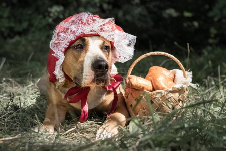 Beautiful dog in halloween fairy-tale costume of little red cap. Portrait of cute puppy posing in red riding hoold cap and basket with pastry in green forest background