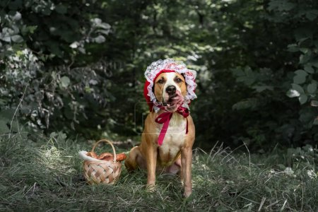 Beautiful dog in halloween fairy-tale costume of little red cap in forest. Portrait of cute puppy posing in red riding hoold cap and basket with pastry in green nature background
