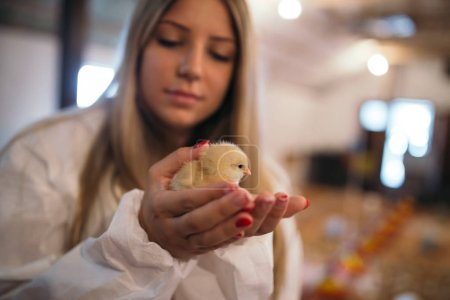 Photo for Young girl holding chick - Royalty Free Image