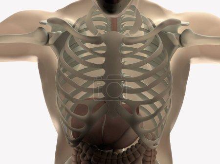 AnatomyInsider