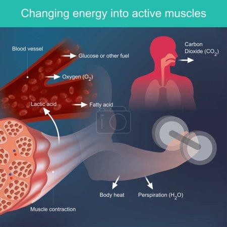 Der Körper verwendet Nährstoffe, die beim Training Energie liefern, da aufgrund von Faktoren aus dem Blutsystem und vor allem Muskeln Abfälle wie Schweiß und Wärme freigesetzt werden..