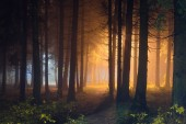 Mystic night forest with shining light