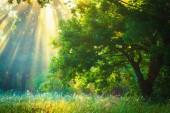 Sun rays through branches trees in green garden