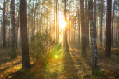 Sun in spring forest. Sunny nature landscape in forest park in beautiful morning