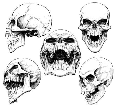 Photo pour Ensemble des crânes avec des crocs - image libre de droit