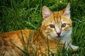 """Постер, картина, фотообои """"закройте милые друзья кошек на автомобиле в природе"""""""