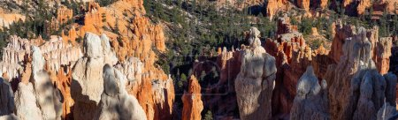 Photo for Beautiful View of an American landscape during a sunny day. Taken in Bryce Canyon National Park, Utah, United States of America. - Royalty Free Image
