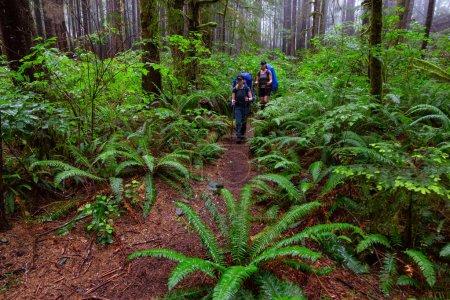 Photo pour Des amies aventureuses parcourent le sentier Juan de Fuca dans les bois par une journée d'été brumeuse et pluvieuse. Porté près de Port Renfrew, île de Vancouver, C.-B., Canada . - image libre de droit