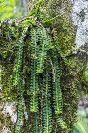 Detail der tropischen grünen Orchidee, serrinha do alambari ökologisches Reservat im atlantischen Regenwald von serra da mantiqueira, Rio de Janeiro, Brasilien