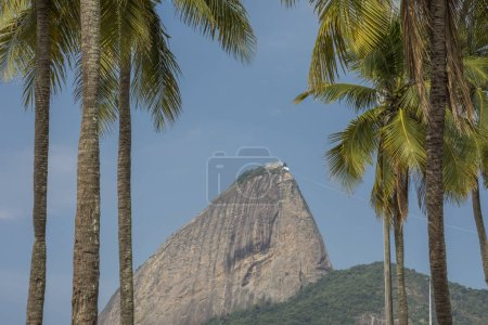 Photo for Beautiful landscape with palm trees in the leisure area Aterro do Flamengo, view to the Sugar Loaf Mountain on the back, Rio de Janeiro, Brazil - Royalty Free Image