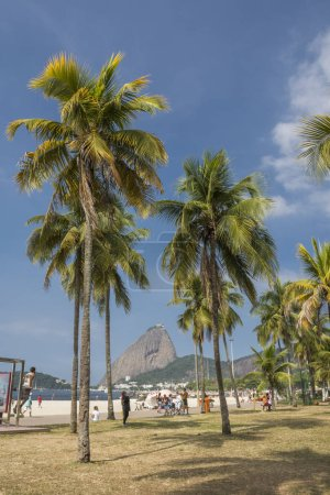 Beautiful landscape with palm trees in the leisure area Aterro do Flamengo, view to the Sugar Loaf Mountain on the back, Rio de Janeiro, Brazil
