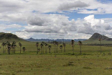wunderschöne cerrado vegetationslandschaft mit buriti palmen im maytrea garten, chapada dos veadeiros, goias, zentralbrasilien