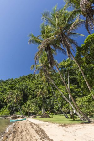 Coconut palm trees on beautiful tropical rainforest beach, Saco do Mamangua, Paraty, Costa Verde region in south Rio de Janeiro, Brazil