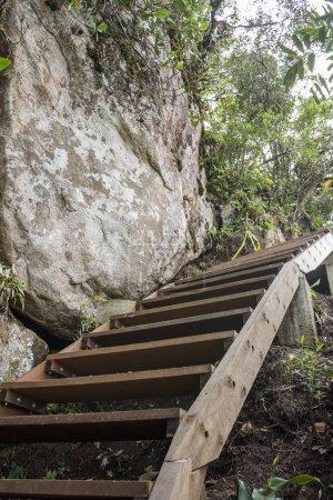Photo pour Escaliers en bois sur la randonnée de sentier dans la forêt tropicale atlantique, parc National forêt de Tijuca, Rio de Janeiro, Brésil - image libre de droit