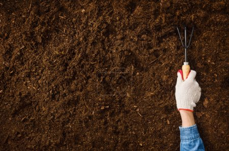 Photo pour Plantation d'une plante sur un fond de sol naturel, la main femme. Appareil photo dessus, vue de dessus. Fond naturel pour publicités. - image libre de droit
