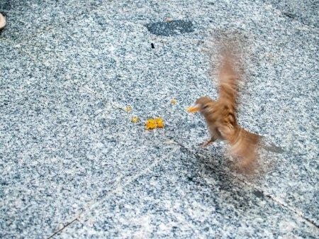 Photo pour Perchant d'oiseau de moineau, gros plan, vie sauvage - image libre de droit