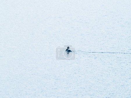 Foto de Pájaro de agua, vida salvaje. Fauna - Imagen libre de derechos
