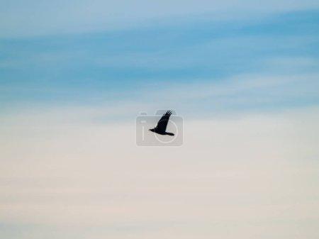 Photo pour Oiseau dans le ciel bleu, fermer, vie sauvage - image libre de droit