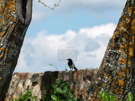 Photo pour Oiseau perching, close up, la vie sauvage - image libre de droit