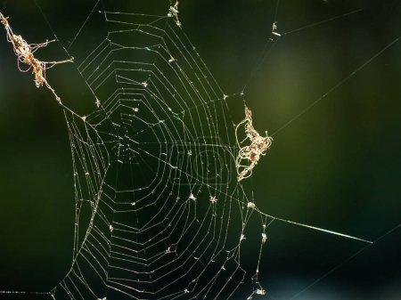 Photo pour Vegetation through spider web. Nature - image libre de droit