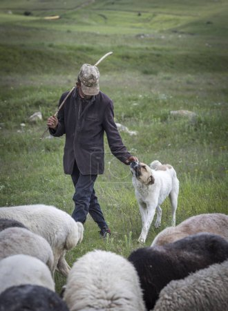 Areni, Armenia, 2nd June, 2018: armenian man herding his sheep in a countryside