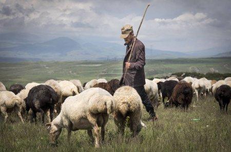 Areni, Armenia, 2nd June, 2018: armenian man herdi...