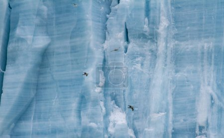 Photo pour Plan plein cadre d'oiseaux devant un glacier massif - image libre de droit