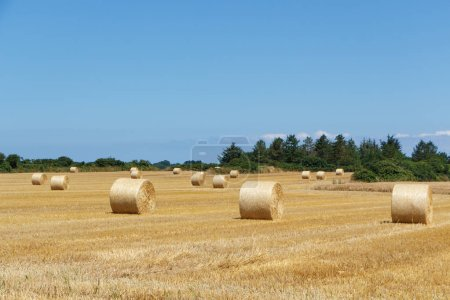 Straw bales in a field in Brittany during summer