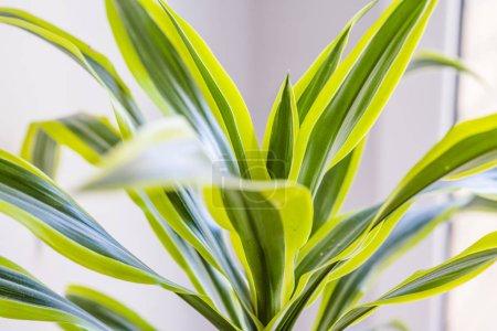 Photo pour Plante verte en pot, gros plan - image libre de droit