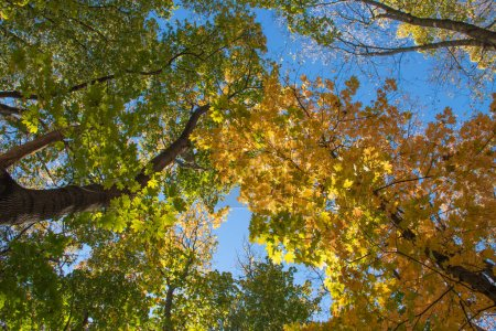 Photo for Autumn forest, yellow and green leaves on trees - Royalty Free Image