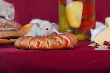 Photo for The concept of tasty treat. Mice are sitting on a red table. Rats on the background of food. Decorative rodents with buns. - Royalty Free Image