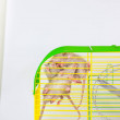 The concept of cramped. Mice are sitting in a gree...