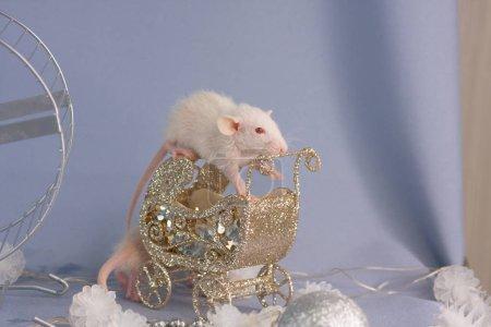 Photo pour Une souris blanche est assise dans un petit chariot à jouets. Le rat du Nouvel An approche. Rongeur décoratif avec décorations . - image libre de droit