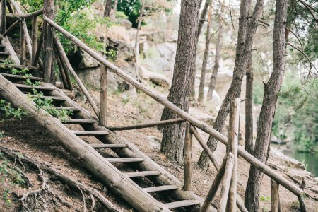 scenic shot of wooden staircase in calm forest