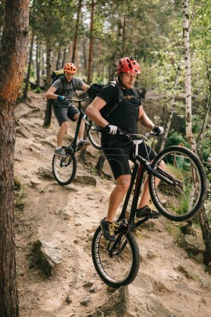 young trial bikers riding downhill on back wheels at beautiful forest