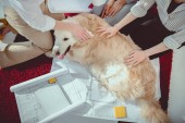 cropped shot of businesswomen petting furry dog near blueprints with digital tablet