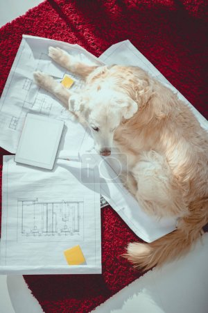 above view of furry dog lying on blueprints near digital tablet with blank screen
