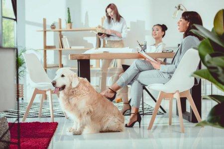 Foto de Jóvenes multiétnicas en ropa formal con perro trabajando en oficina - Imagen libre de derechos