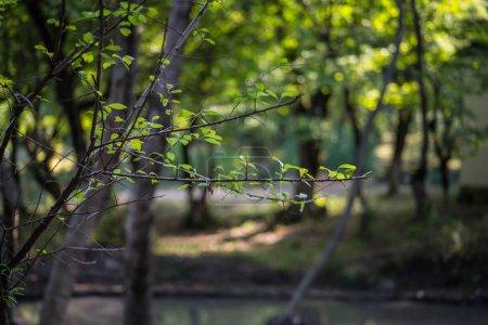Photo pour Arbre avec mousse sur les racines dans une forêt verte ou mousse sur le tronc de l'arbre. Écorce d'arbre avec mousse verte. Azerbaïdjan nature. Concentration sélective . - image libre de droit