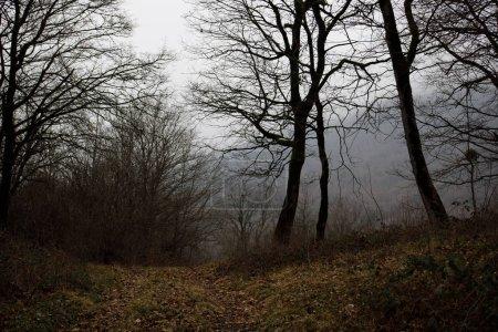 Photo pour Paysage avec belle fog en forêt sur une colline ou d'un sentier à travers une forêt mystérieuse hiver avec des feuilles de l'automne sur le terrain. Route à travers une forêt d'hiver. Atmosphère magique. Nature de l'Azerbaïdjan - image libre de droit