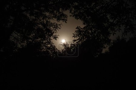 Photo for Night landscape of sky and super moon with bright moonlight behind silhouette of tree branch. Serenity nature background. Outdoors at nighttime. Selective focus - Royalty Free Image